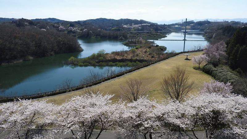 三春滝桜眺めの丘