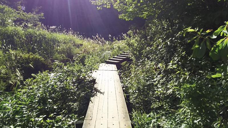チャツボミゴケ公園遊歩道階段