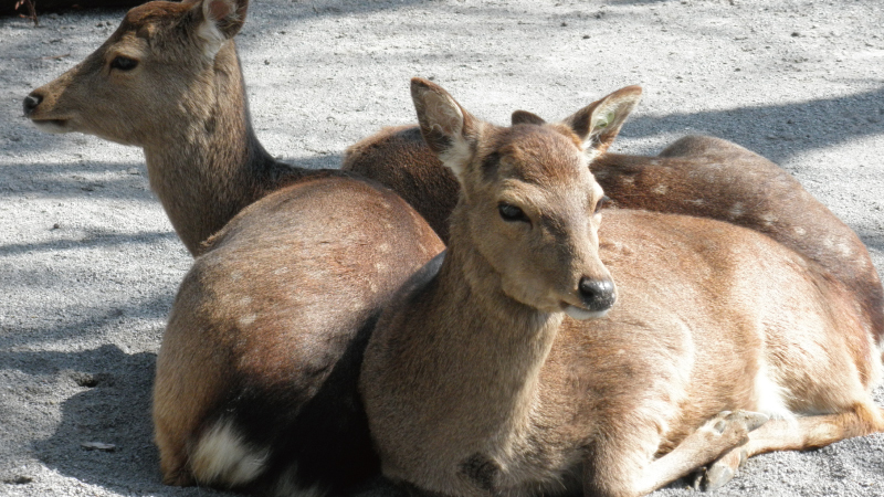 伊豆シャボテン公園動物2