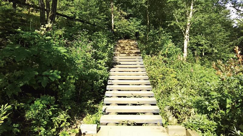 チャツボミゴケ公園遊歩道階段2