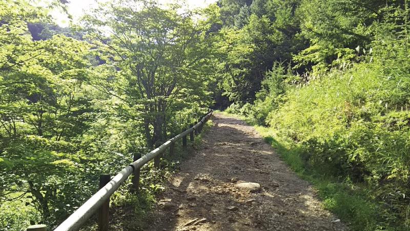 チャツボミゴケ公園遊歩道