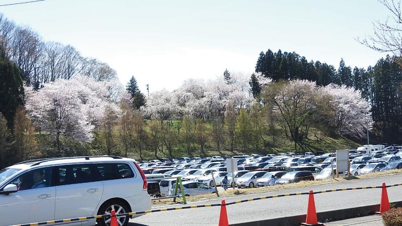 三春滝桜無料駐車場
