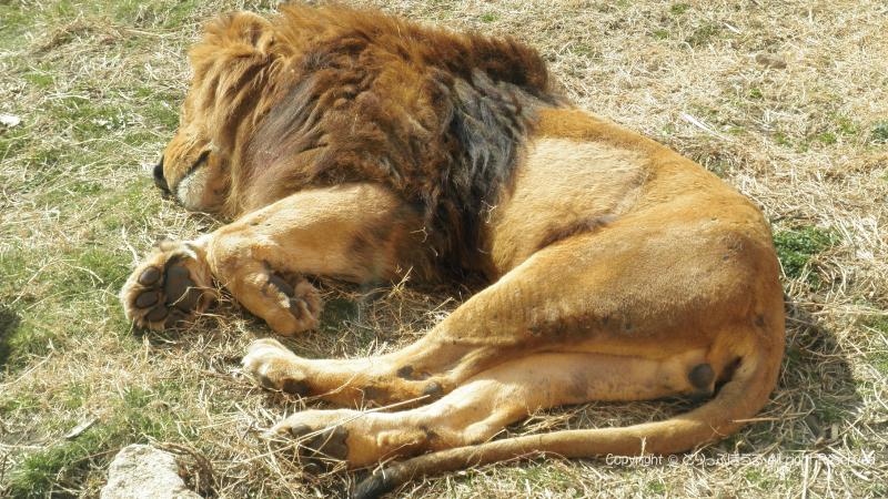 伊豆シャボテン動物ライオン