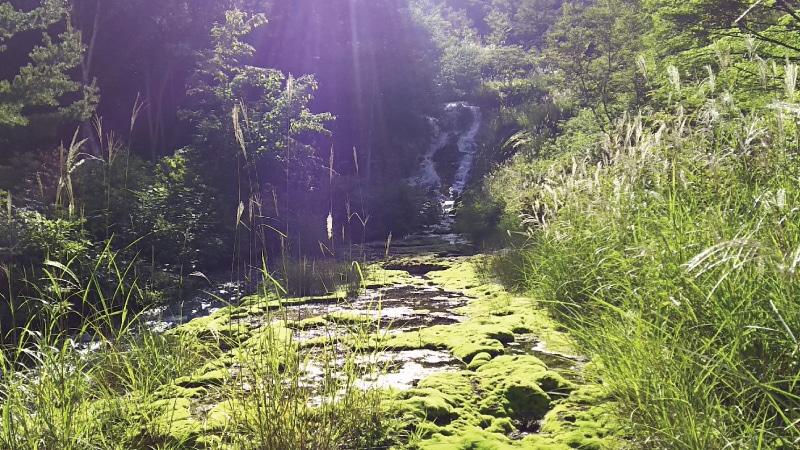 チャツボミゴケと川
