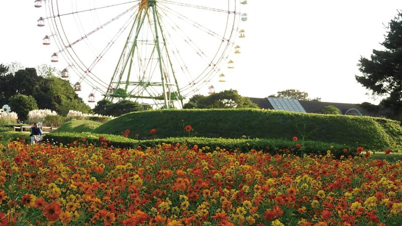 ひたちなか海浜公園の花