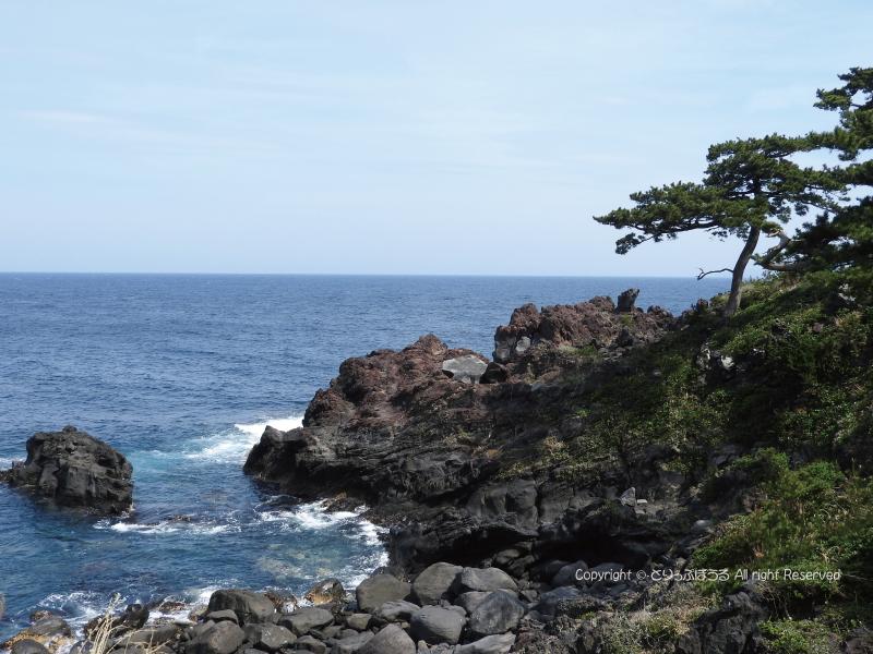 城ケ崎ピクニカルコース崖と松と海