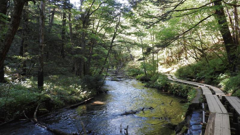 戦場ヶ原から湯滝へ続く遊歩道
