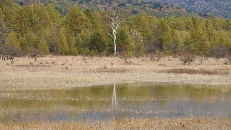 小田代湖2