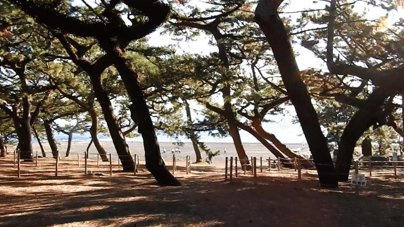松林から海