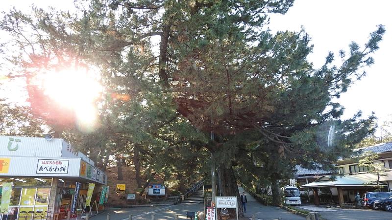 三保の松原神の道2