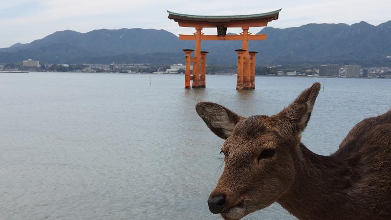 宮島鳥居と鹿