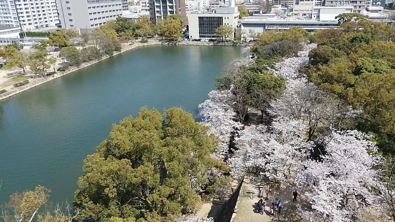 広島城天守閣と桜
