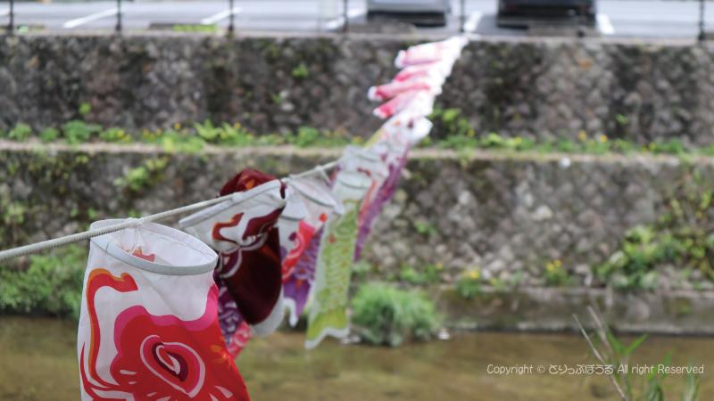 袋田の滝鯉のぼり