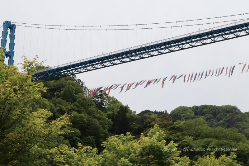 竜神ダムから見上げた竜神大吊橋