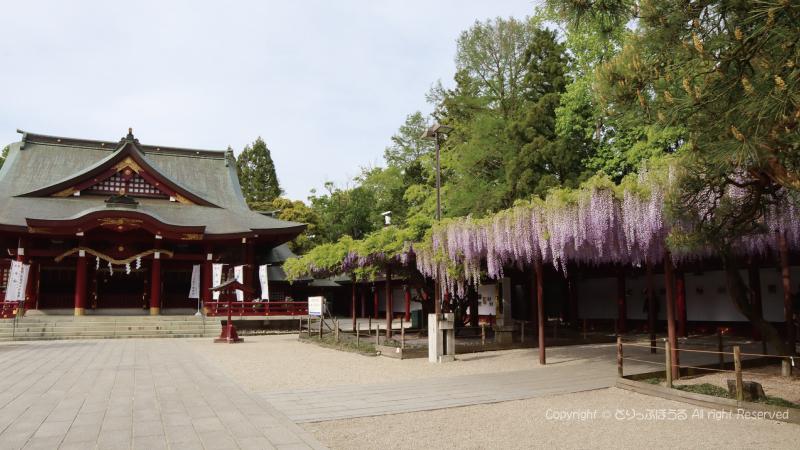 笠間稲荷神社拝殿と藤の花