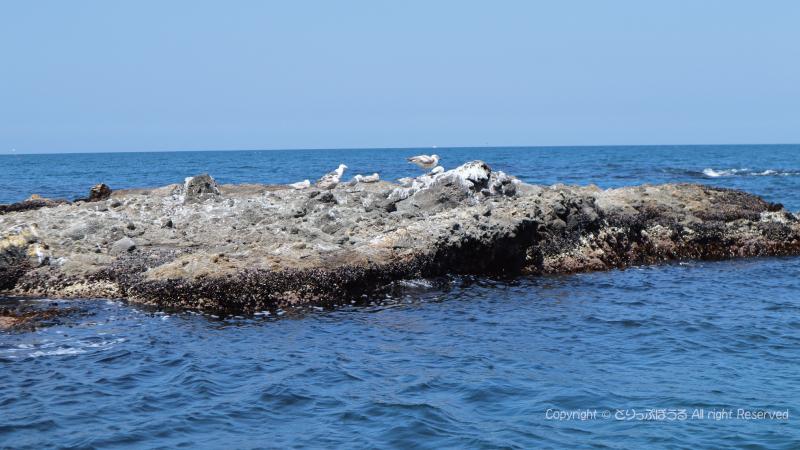 小樽クルーズ海と野鳥