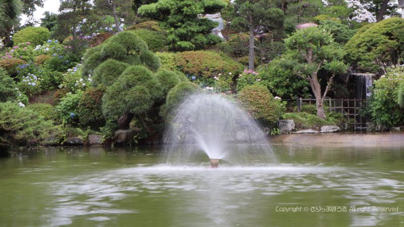保和苑噴水と日本庭園とあじさい