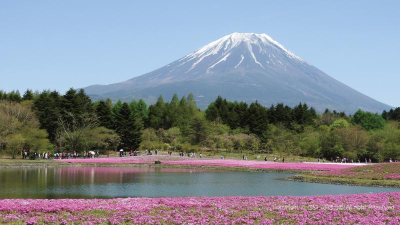 富士芝さくらまつり