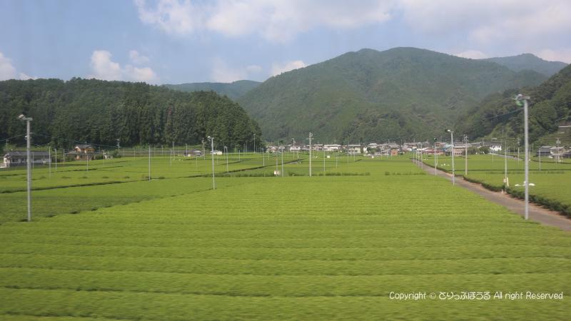 大井川鉄道車窓の茶畑