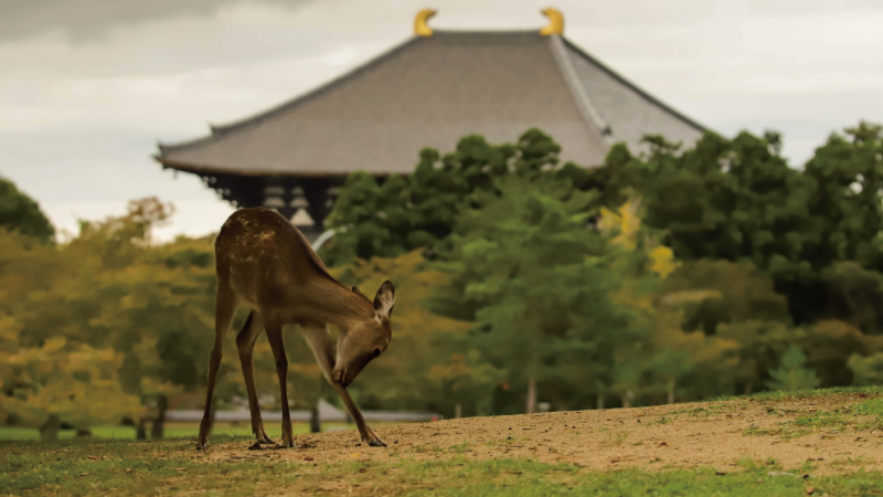 奈良フリーパス
