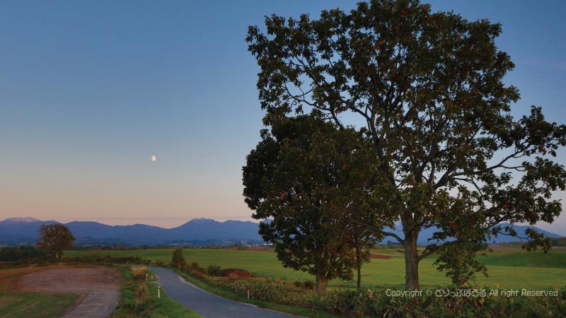 親子の木と月