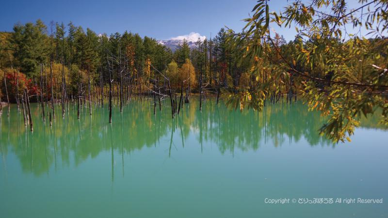 お昼過ぎの青い池