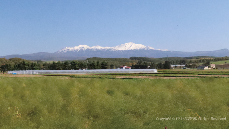道道966号線から見た大雪山