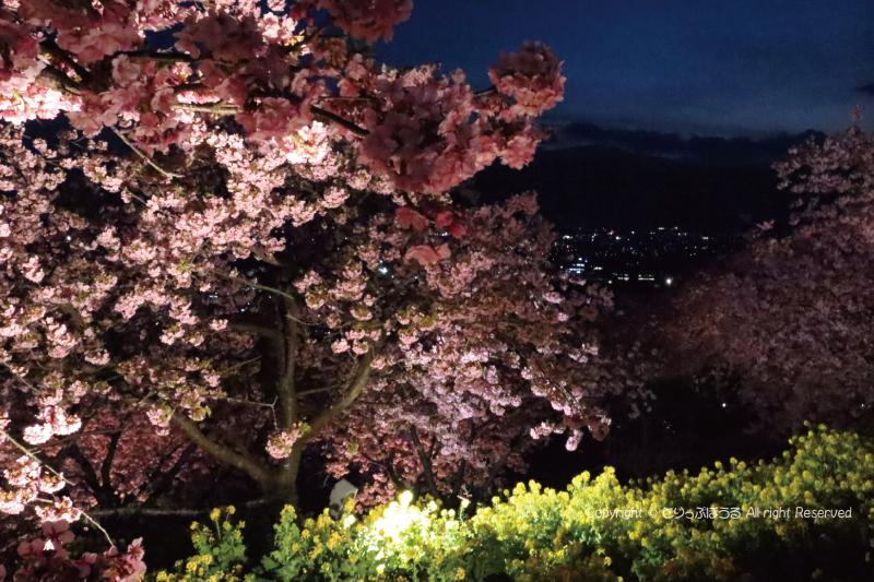 18時頃のライトアップしたまつだ桜まつり会場
