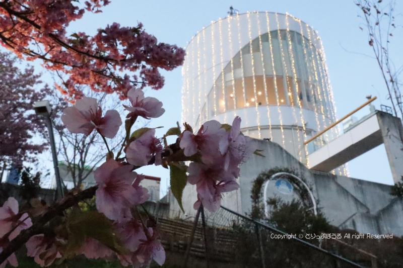 まつだ桜まつり会場富士山撮影ポイント