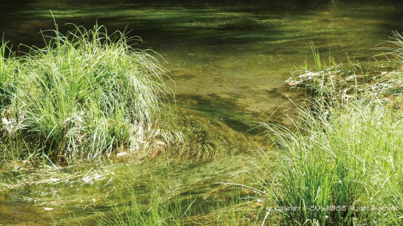 戦場ヶ原の透明感抜群の小川の水