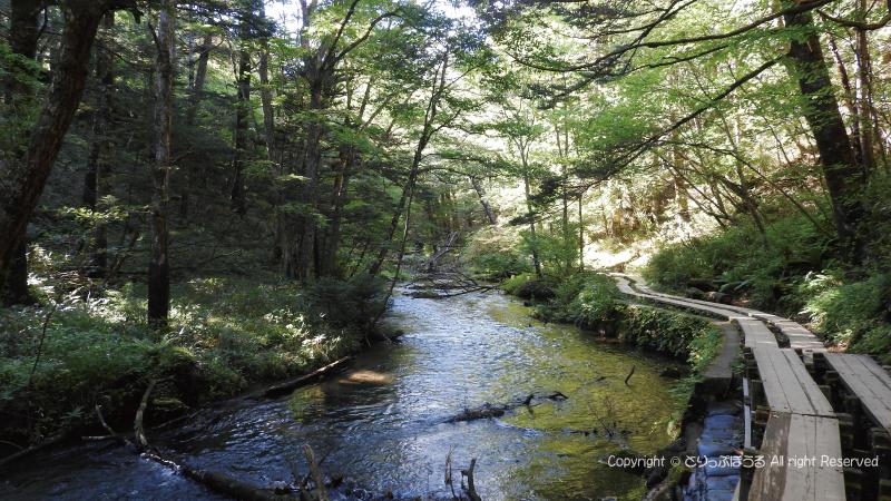 小滝への遊歩道