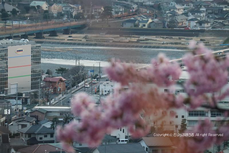 まつだ桜まつり会場から小田急線