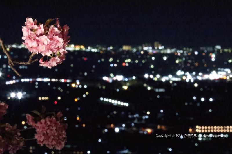 夜景とまつだ桜まつり