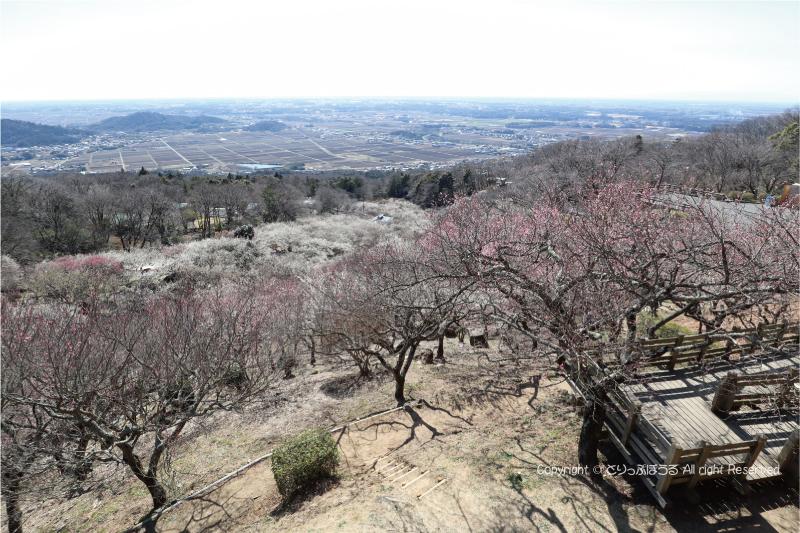 筑波山梅まつり会場の展望四阿からの眺望