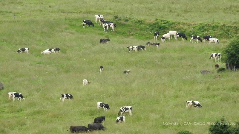 清里高原まきば牧場