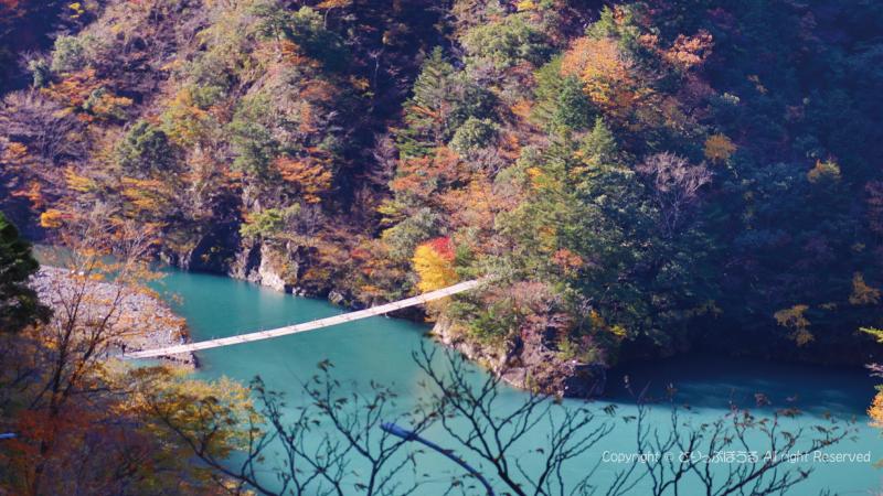 紅葉した夢の吊橋寸又峡