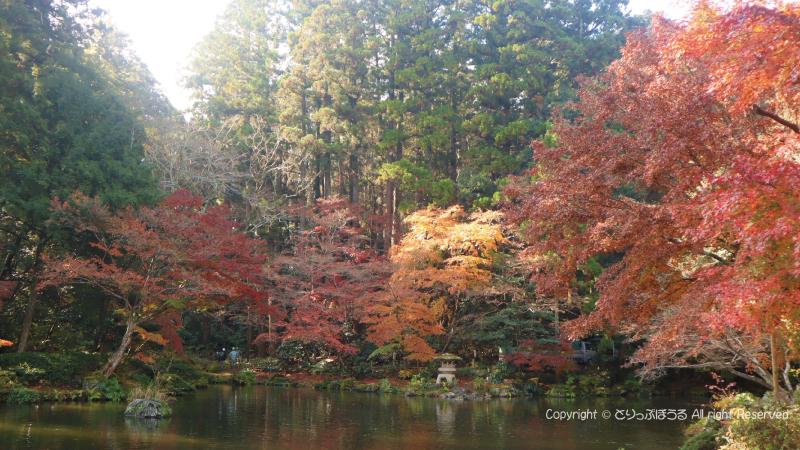 成田山公園龍樹池