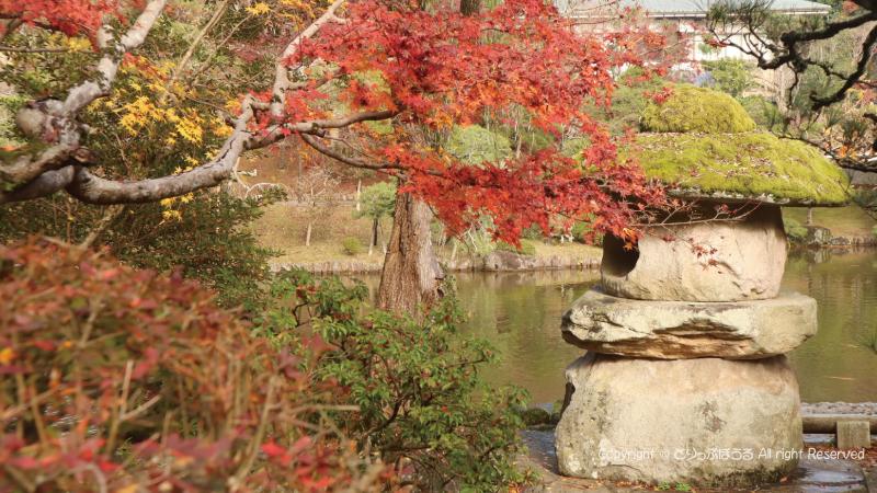 成田山公園紅葉