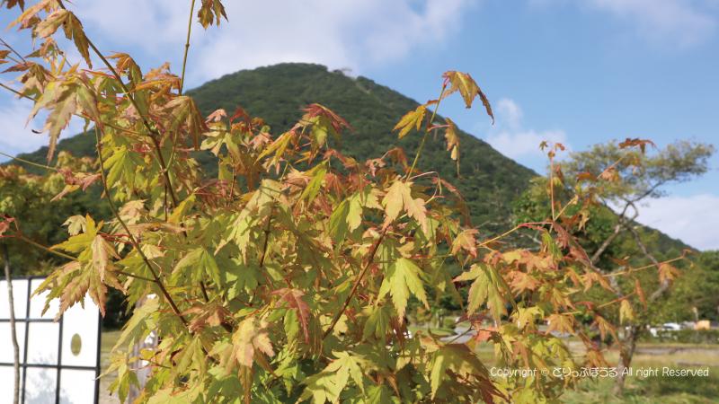 色づき始めた紅葉と榛名山
