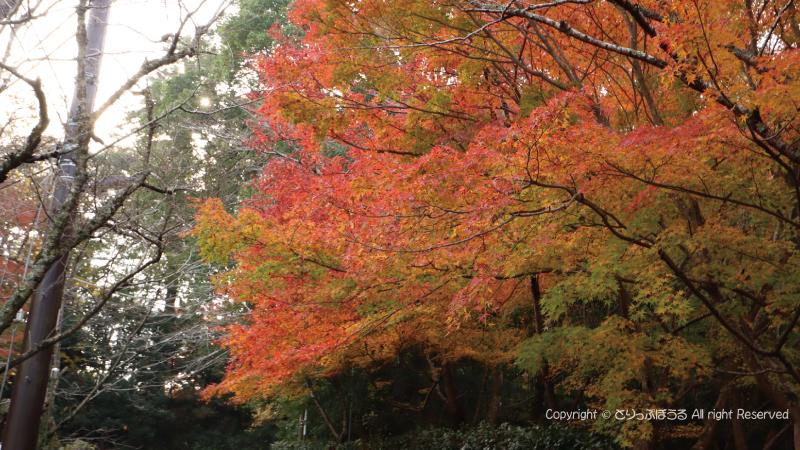 佐白山麓公園の笠間城跡への上り坂の紅葉