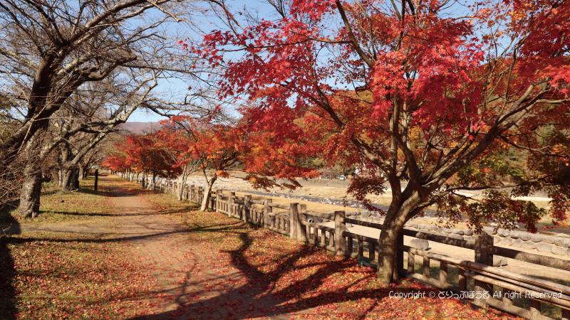 紅葉した塩原渓谷遊歩道