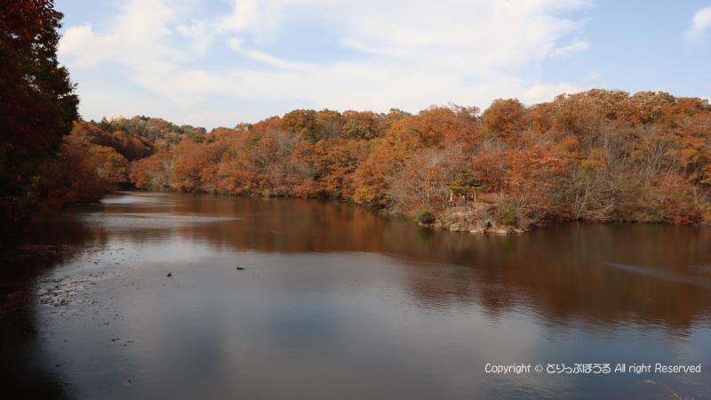 北山公園の白鳥の湖