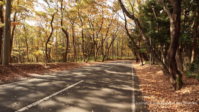 北山公園へ林の中