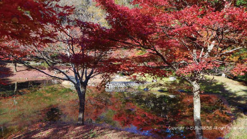 草履石公園紅葉3