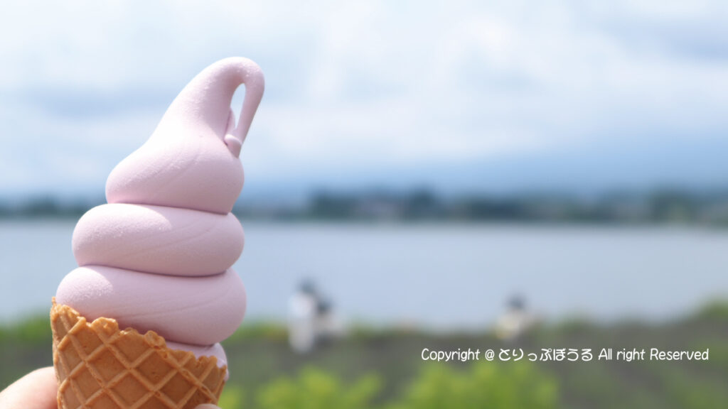 大石公園ラベンダーソフトクリーム