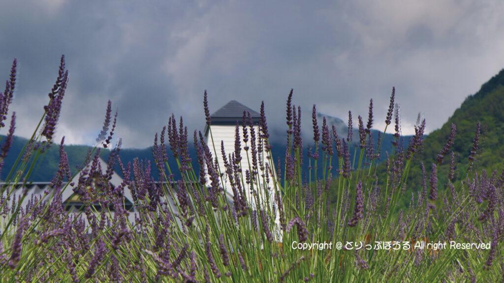 ラベンダーと河口湖自然生活館