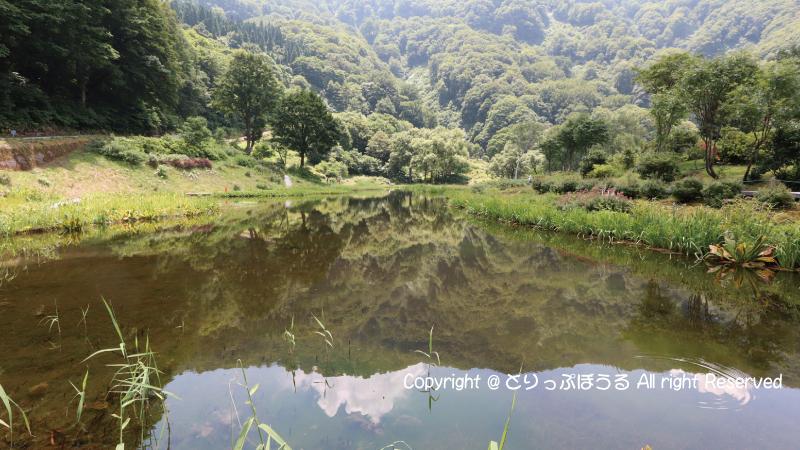 湯沢高原アルプの里池